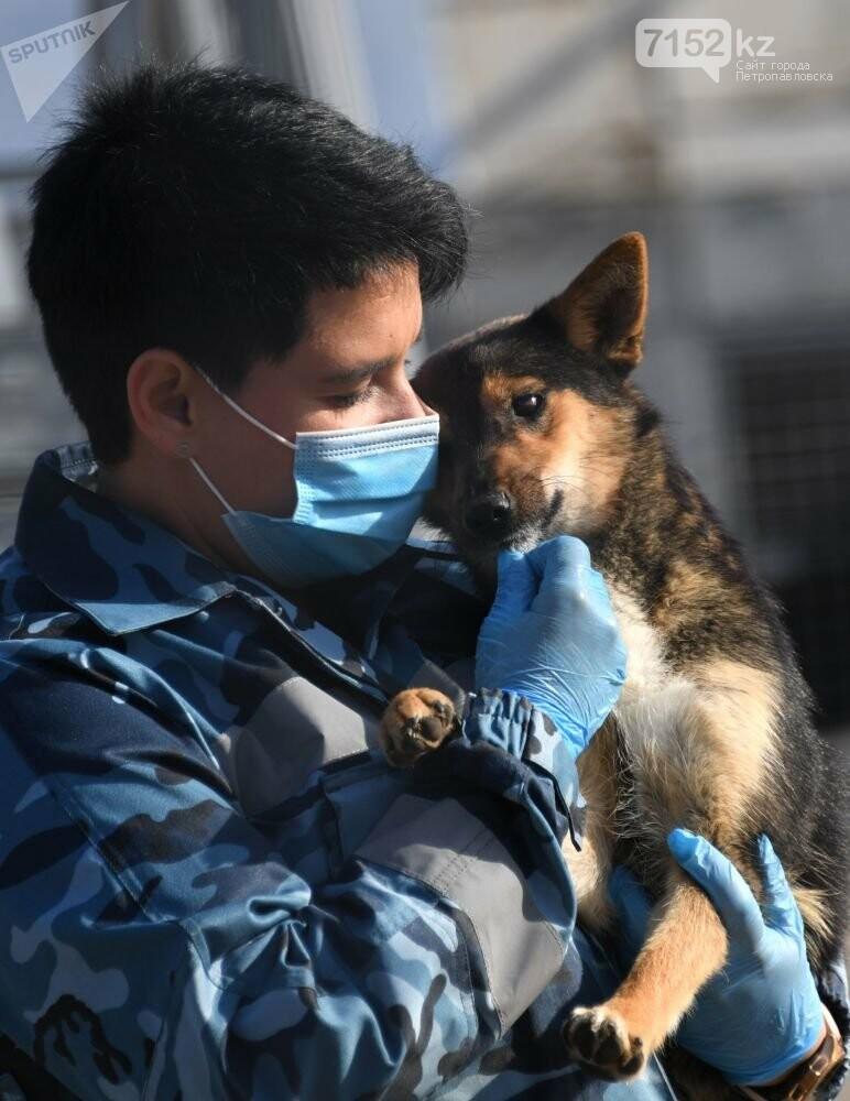 Собаки определяют коронавирус по запаху, фото-1