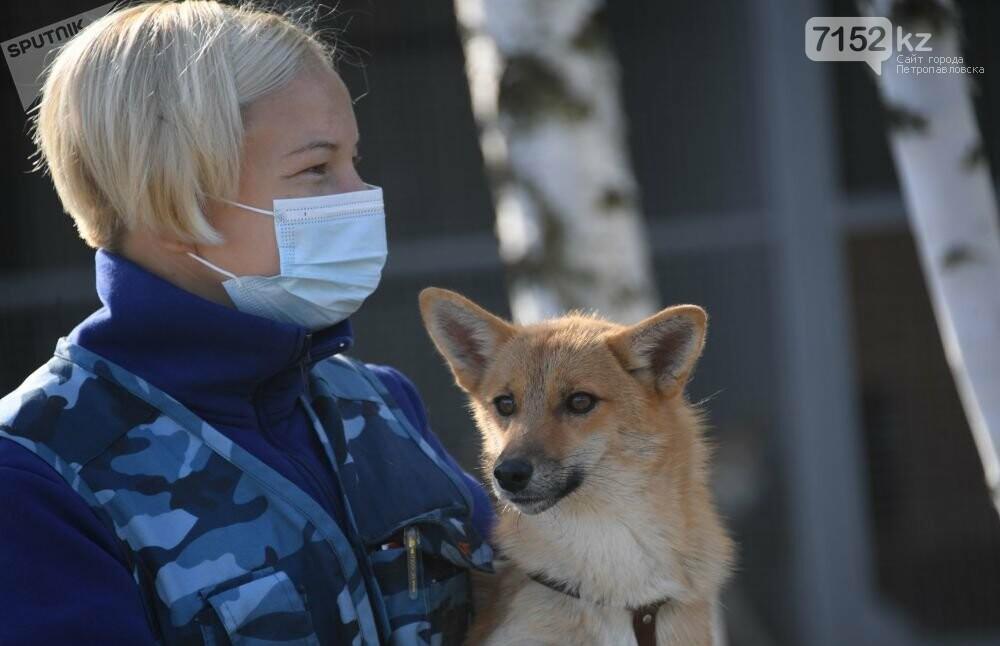 Собаки определяют коронавирус по запаху, фото-4
