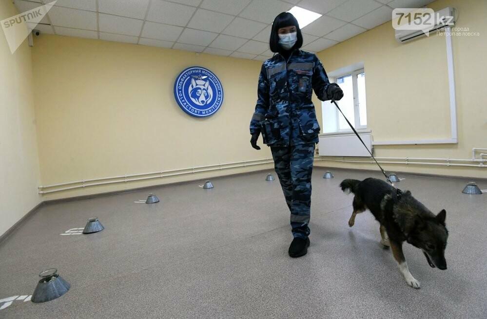 Собаки определяют коронавирус по запаху, фото-3