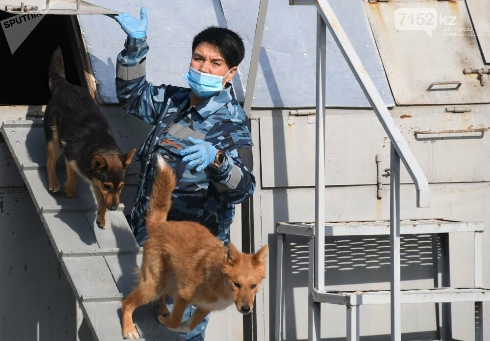 Собаки определяют коронавирус по запаху, фото-2