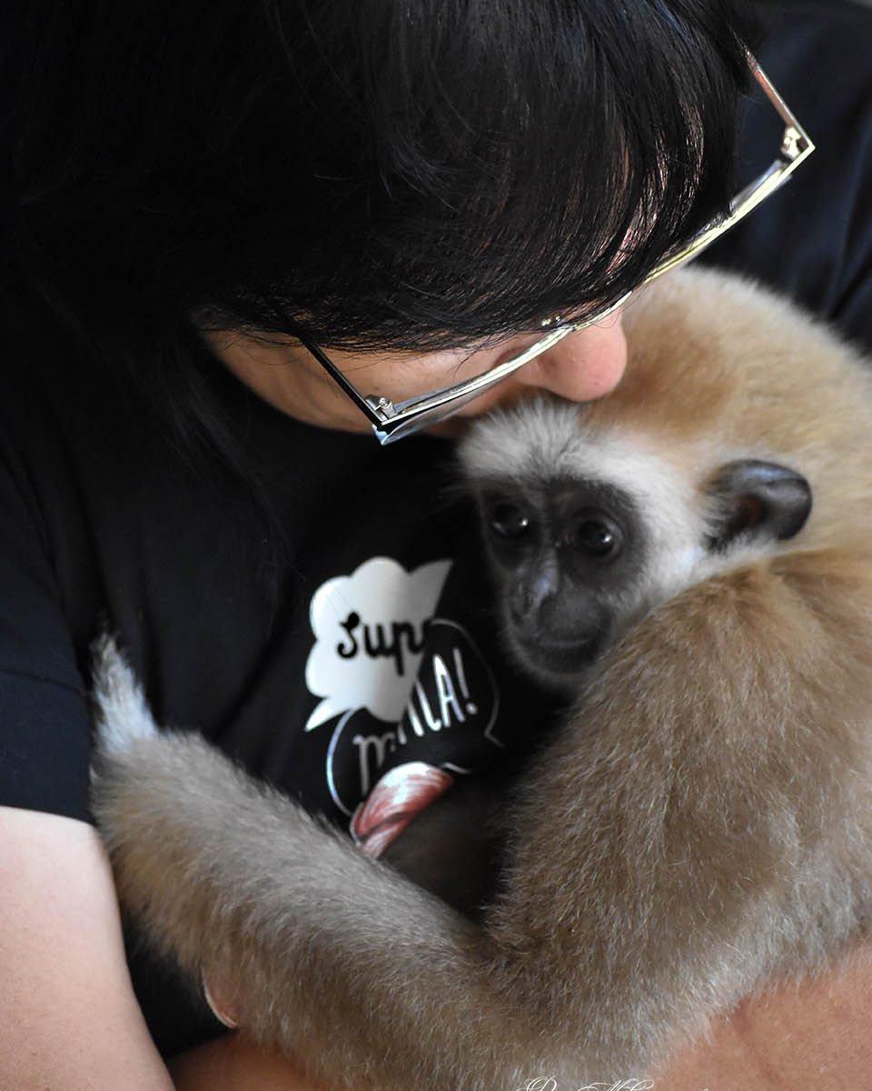 Как алматинка стала мамой обезьянам, фото-2