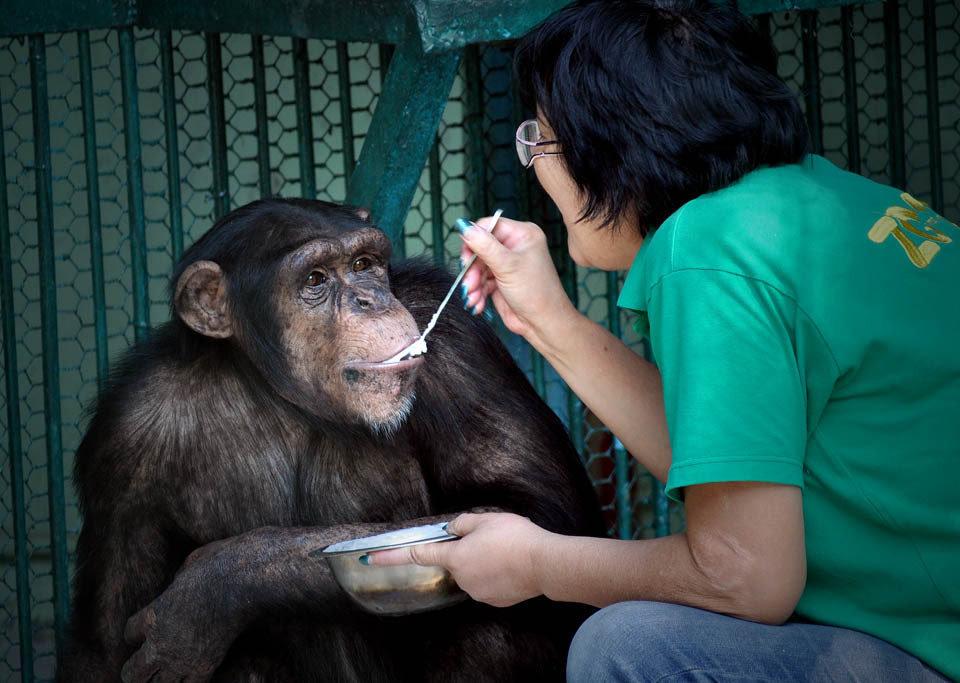 Как алматинка стала мамой обезьянам, фото-1